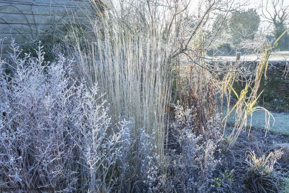 Winter image #2