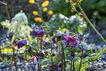 Spring image #3