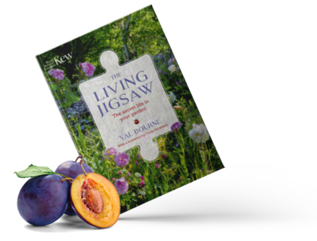 The Living Jigsaw: the secret life in your garden image #1